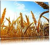 Getreide im Sonnenschein Format: 80x60 auf Leinwand, XXL