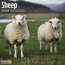 2020 Sheep Calendar 16 Month 12 x 12 Wall Calendar by Bright Day Calendars (Farm Animals Wall Calendar)
