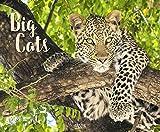 Big Cats 2020 - Korsch Verlag