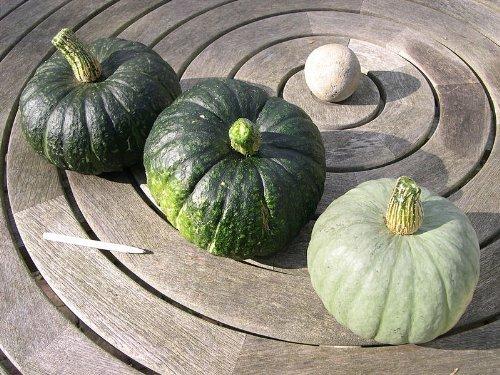 Hokkaido-Kürbis (Grün) 8 Samen -Seltene Farbvariante-