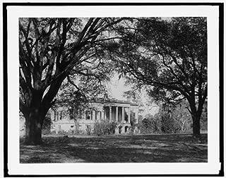 HistoricalFindings Photo: Hermitage,plantations,Trees,Savannah,Georgia,GA,Detroit Publishing Company,c1907