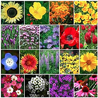 Bulk 1 Ounce: 13,000 Pollinator Attracting Wildflower Seeds to Attract Bees, Butterflies, and Other Beneficial Insects, Bees Knees Mix