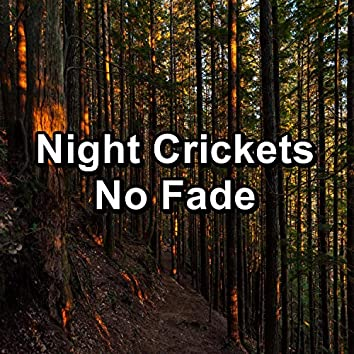 Night Crickets No Fade