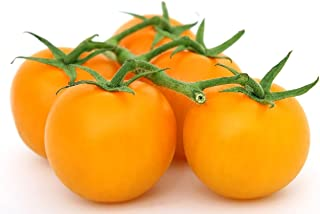 Organic Golden Jubilee Tomato Seeds - Large Tomato - One of The Most Delicious Tomatoes for Home Growing, Non GMO - Neonicotinoid-Free.