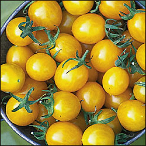 Blondkopfchen Yellow Cherry Tomato - 20 Seeds