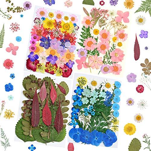 YMHPRIDE 4 Paquetes de Flores secas para Bricolaje, Margaritas secas Naturales Reales, Velas, joyería de Resina, Colgante de uñas, Manualidades para Hacer Decoraciones Florales artísticas