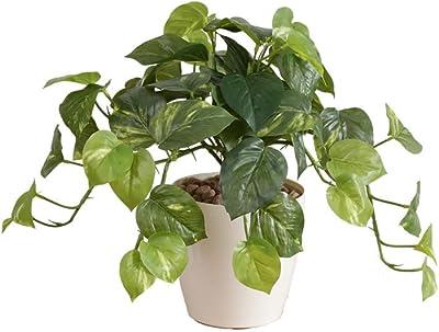 グリーン/Fresh Pothos フレッシュポトスM 人工植物 観葉植物 光触媒 水やり不要 お手入れ不要 グリーン リアル