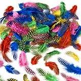 Baker Ross Sachet de Plumes Multicolores et tachetées (Environ 120) - Matériel créatif pour Enfants et Adultes