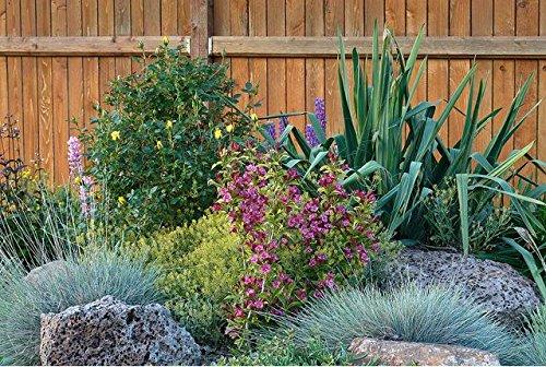 Hot vente 100 fétuque des semences de gazon peut être utilisé aussi facile géologique pousser de l'herbe pérenne pour la maison jardin