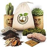 Succulent Cactus Seed DIY Terrarium Germination Starter Kit for Indoor Garden Growing - Mini Terrarium Kit with Seeds, Soil, Rocks, Moss, Pea Gravel, Activated Charcoal, and Burlap Potting Planters