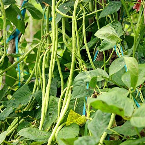 good01 30pcs Lange Bohnen Gemüsesamen   Nahrhafte Gemüsesamen Für Hauptbauernhof-Garten Lange Bohnensamen