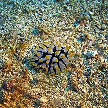 Sea Slugs Vol. 7