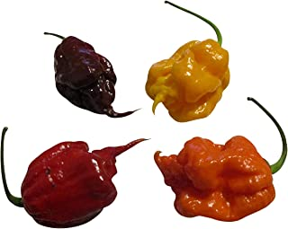 Trinidad Scorpion MixBrown-Red-Yellow 30 Seeds -XXXL-HOT-