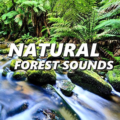 Choice Amazon Rainforest Sounds