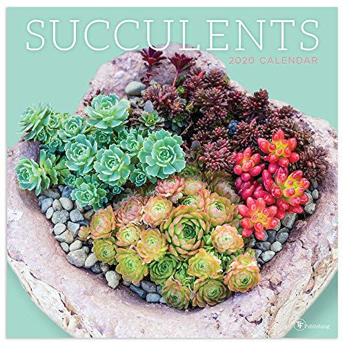 2020 Succulents Wall Calendar