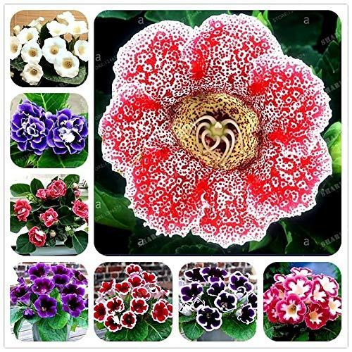 HONIC 12: 22 Farben Gloxinie Samen Perennial Bonsai Balkon Blumen 100 Stück