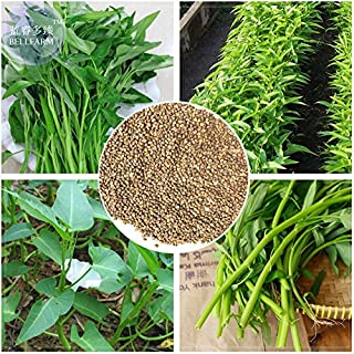2018 Hot Sale!! Maslin Thai Water Spinach Kangkong Vegetable Seeds, Heirloom Organic Swamp Cabbage E4202