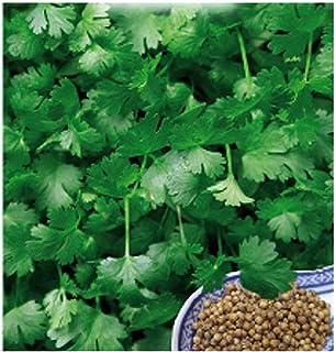 100 Aprox- Semillas de cilantro - Coriandrum Sativum en su empaque original fabricado en Italia - Coriandoli