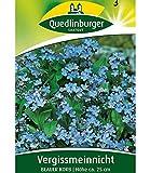 Quedlinburger Vergissmeinnicht 'Blauer Korb', 1 Tüte Samen