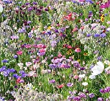 Wild Scented Bee and Butterly Cottage Garden Grass Seed Free Perennial...