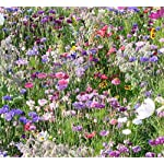 Wild Scented Bee and Butterly Cottage Garden Grass Seed Free Perennial Plant Mix Flower Seeds 20g