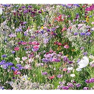 Wild Flower Cottage Garden Bee & Butterfly Fragrant Perennial Plant Mix Wild Flower Seeds 25g - 200g