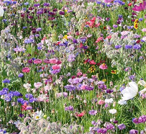 Wild Scented Bee and Butterly Cottage Garden Grass Seed Free Perennial Plant Mix Flower Seeds (Bee and Butterfly)