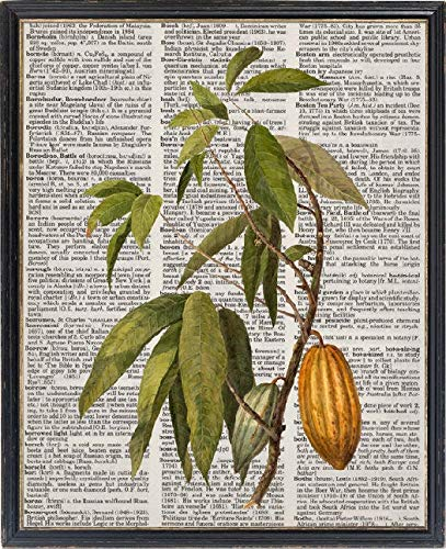 Printable Woordenboek Kunst Cacao Plant Vintage Afbeelding Botanische Poster Print Digitale Muur Kunst