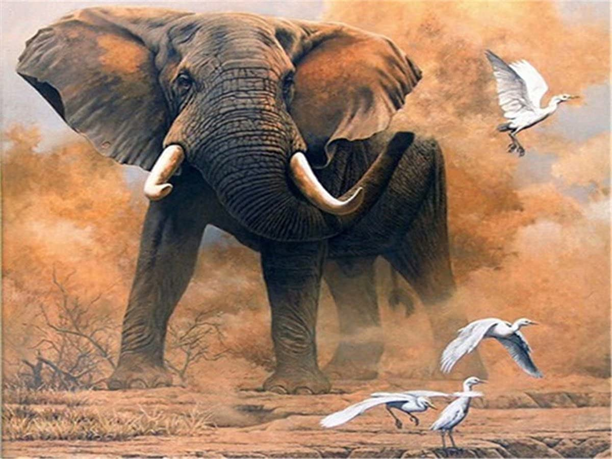 Diamond Painting Year-end gift Max 85% OFF Kitss for Adults Full Drill Elephant Pa