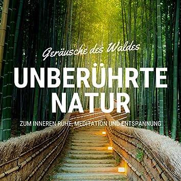 Unberührte Natur: Geräusche des Waldes zum Inneren Ruhe, Meditation und Entspannung