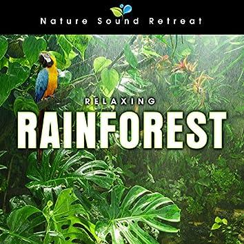 Relaxing Rainforest for Meditation & Relaxation