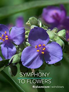 Symphony to Flowers