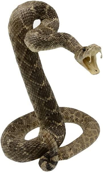 TG 有限责任公司动物标本盘绕引人注目的东方响尾蛇山