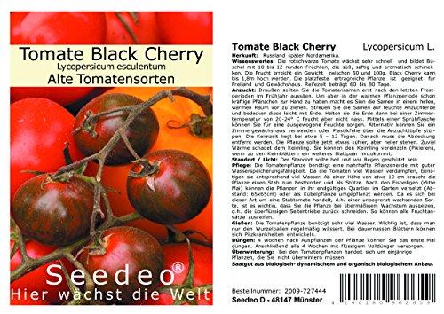 Seedeo® Tomate Black Cherry (Lycopersicum L.) 25 Samen BIO