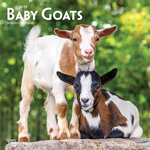 Baby Goats 2019 Calendar