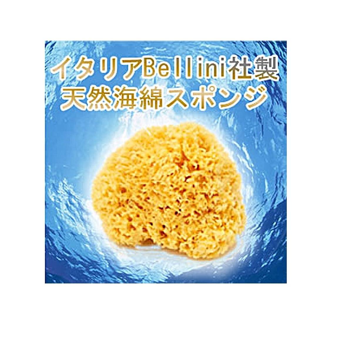 動的ランチ部分的イタリア産最高級天然海綿ハニコム種(16cm)
