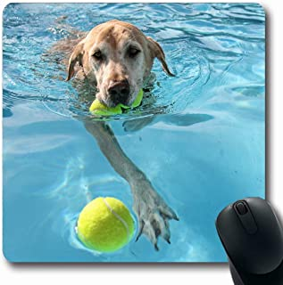 Ahawoso Mousepads Pooch Yellow Labrador Dog Local Public Pool Mouth Parks Blue Summer Ball Lab Best Aquatic Oblong Shape 7.9 x 9.5 Inches Non-Slip Gaming Mouse Pad Rubber Oblong Mat