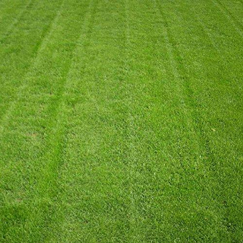 50g / Paquet Zoysia semences de gazon importé du Japon étendu au bleu herbe graine alêne piétinement saison chaude résistant à la sécheresse