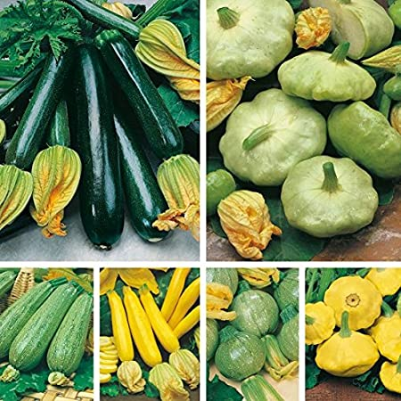 Creative Farmer Vegetable Seeds Summer Squash All That Grow Seeds Summer Squash Seeds Home Garden Seeds Amazon In Garden Outdoors
