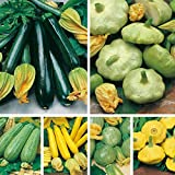 Zucchini/Summer Squash 6 Types (avg 100++ Seeds Combine) by Seedscare India- Squash Yellow, Green n Black Beauty, Pattison pan Mix, Round Tondo Green n Yellow