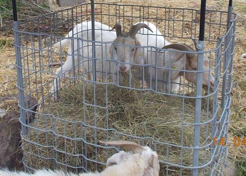 Hofer24 Ziegen - Heuraufe/Futterraufe für Schafe - OHNE Ausschnitt