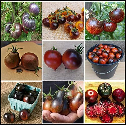 Tomatensamen Dunkle/Schwarze Tomatensorten, TOP Qualität aus Deutschland, ohne Gentechnik, Saatgut, essbare und gesunde Tomaten, Rarität, extravagant