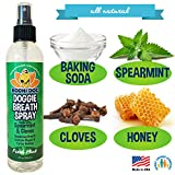 Bodhi Dog Large Natural Dog Breath Freshener for Dogs Teeth and Healthy Gums | Best for Tartar Cleaning, Plaque Remover & a Fresh Dental Oral Care Cleaner