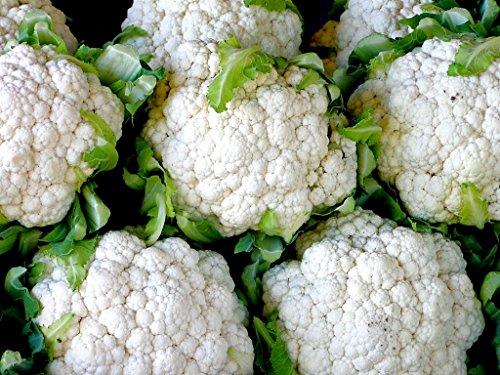 100 boules de neige semences améliorées Chou-fleur
