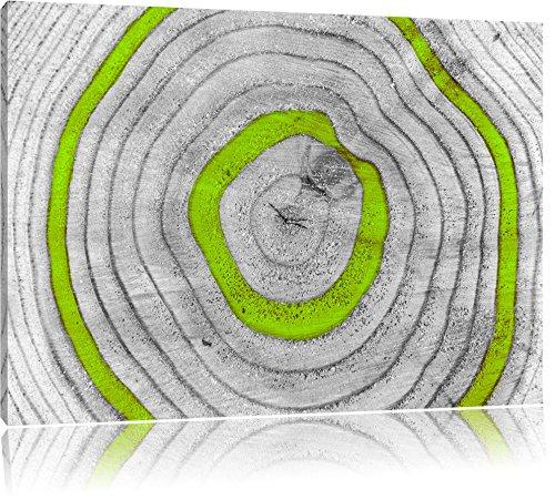 Green Tree ringenFoto Canvas | Maat: 120x80 cm | Wanddecoraties | Kunstdruk | Volledig gemonteerd