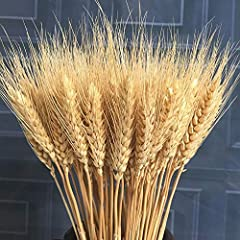 Quantity: 100 Stems Size: 16-17inches, you can trim it to the length you want The wheat Stalks are from the natural farmland and natural dried, no preservatives added. Used for Home Wedding Decor, making wreath,Christmas and Thanksgiving decorations.