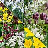 40x Blumenzwiebeln Mix '6 Months of Butterflies' | 40er Set | 8 Sorten | Gemischte Farben | Blumenzwiebeln Frühblüher