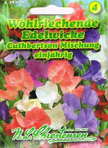 Wohlriechende Edelwicke Cuthbertson Mischung Lathyrus odoratus Wicke rankend