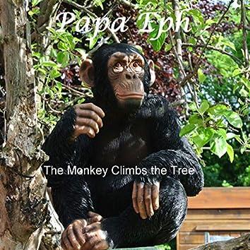 The Monkey Climbs the Tree