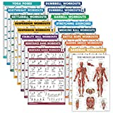 17 Pack - Exercise Poster Set: Dumbbell, Suspension, Kettlebell, Muscular, Medicine Ball, Battle Rope, Resistance Bands, Stretching, Bodyweight, Barbell, Yoga and More (LAMINATED, 18' x 27')
